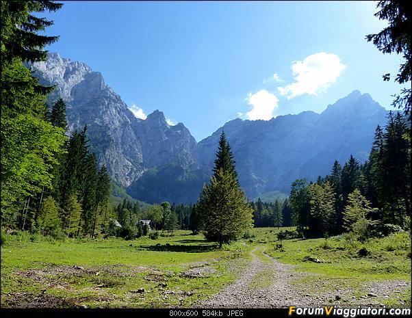 Slovenia, polmone verde d'Europa-p1830183.jpg