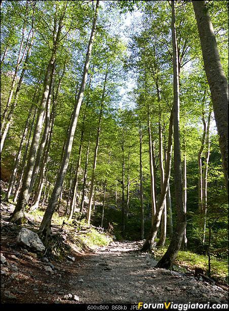 Slovenia, polmone verde d'Europa-p1830312.jpg