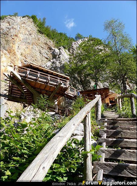 Slovenia, polmone verde d'Europa-p1830333.jpg