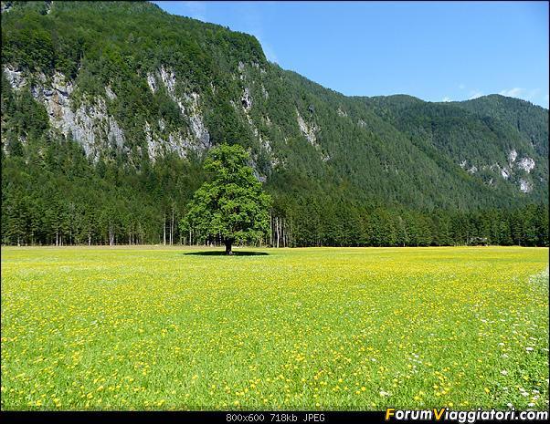 Slovenia, polmone verde d'Europa-p1830393.jpg