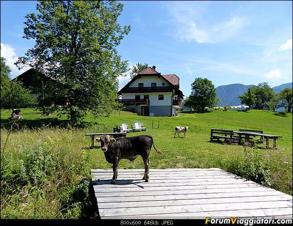 Slovenia, polmone verde d'Europa-p1830488.jpg