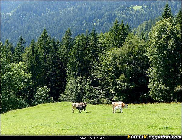 Slovenia, polmone verde d'Europa-p1830507.jpg