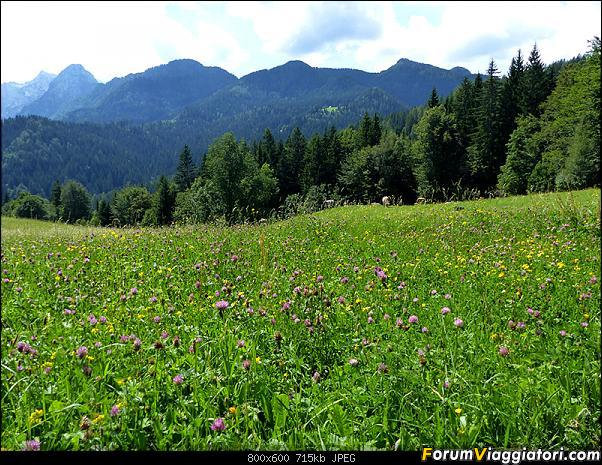 Slovenia, polmone verde d'Europa-p1830557.jpg