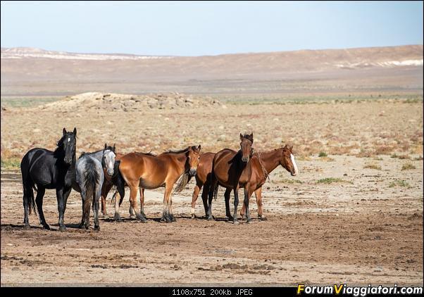I colori del Kazakistan-dsc_6771.jpg