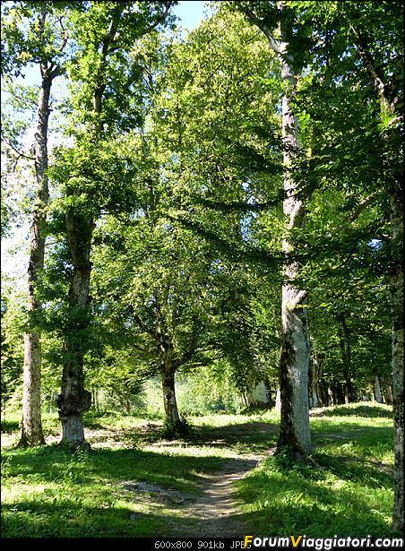 Slovenia, polmone verde d'Europa-p1850569.jpg