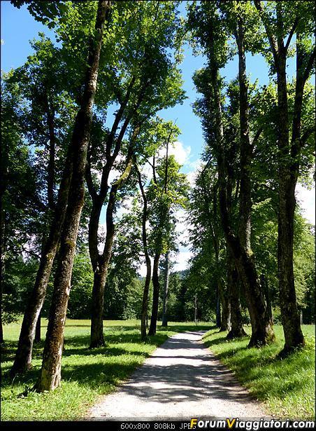 Slovenia, polmone verde d'Europa-p1850574.jpg
