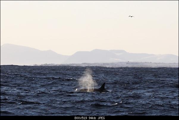 Isola di Senja in schooner-p2190418.jpeg