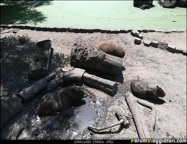 [ARGENTINA] Ushuaia, El Chalten, El Calafate, Bariloche.-img_20200214_120041.jpg