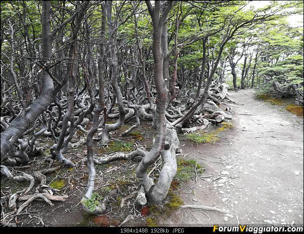 [ARGENTINA] Ushuaia, El Chalten, El Calafate, Bariloche.-img_20200215_122426.jpg