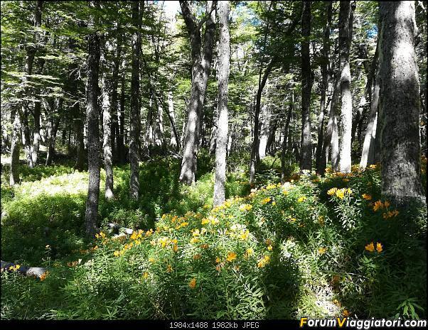 [ARGENTINA] Ushuaia, El Chalten, El Calafate, Bariloche.-img_20200226_115246.jpg
