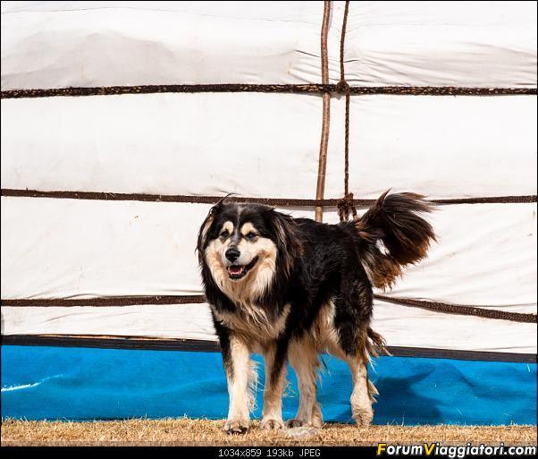 Nomadi e steppe, aquile e montagne: un viaggio in Mongolia-_dsc4738.jpg