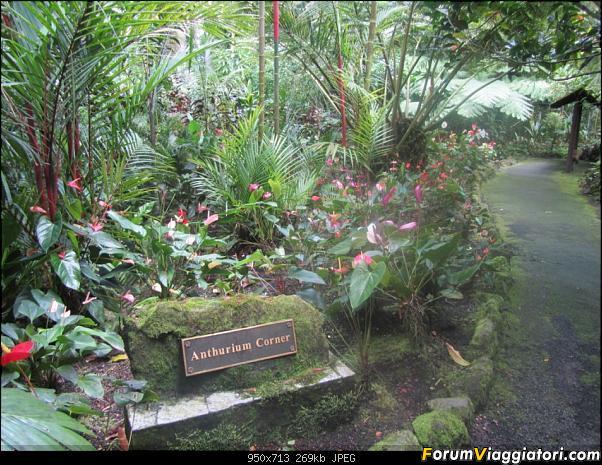 Hawaii Islands - Take your time!!! (agosto 2012)-img_2191.jpg