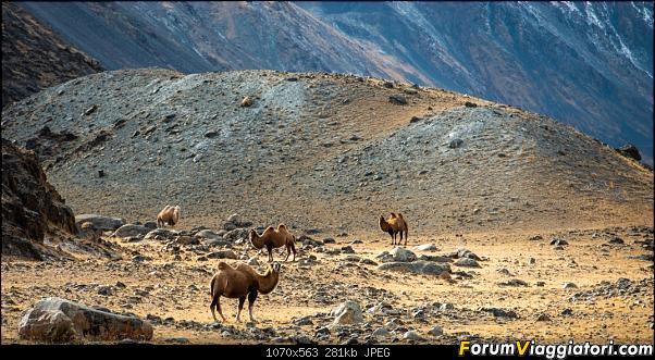 Nomadi e steppe, aquile e montagne: un viaggio in Mongolia-_dsc4908.jpg