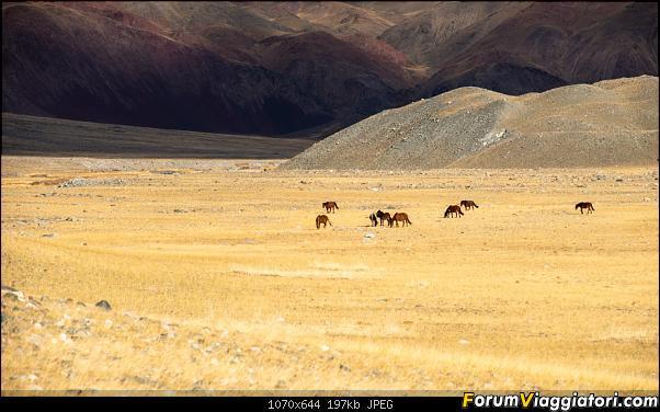 Nomadi e steppe, aquile e montagne: un viaggio in Mongolia-_dsc4943.jpg