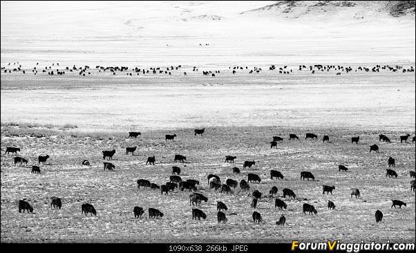 Nomadi e steppe, aquile e montagne: un viaggio in Mongolia-_dsc5119_bn.jpg