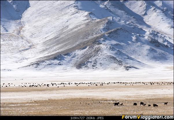 Nomadi e steppe, aquile e montagne: un viaggio in Mongolia-_dsc5122.jpg