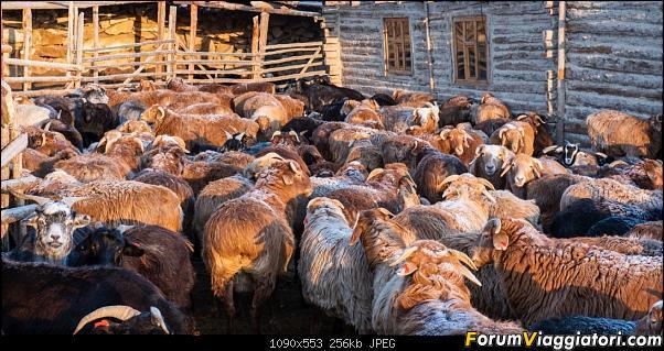 Nomadi e steppe, aquile e montagne: un viaggio in Mongolia-dsc_5185.jpg
