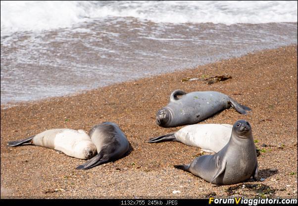 In Patagonia verso la fin del mundo-_dsc5594.jpg