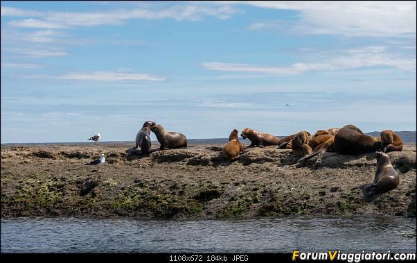In Patagonia verso la fin del mundo-_dsc5716.jpg