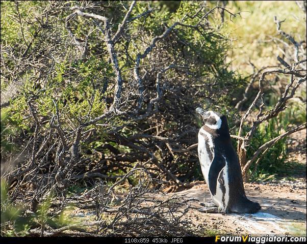 In Patagonia verso la fin del mundo-_dsc5726.jpg