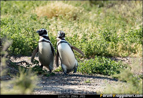 In Patagonia verso la fin del mundo-_dsc5729.jpg