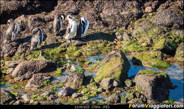 In Patagonia verso la fin del mundo-_dsc5766.jpg