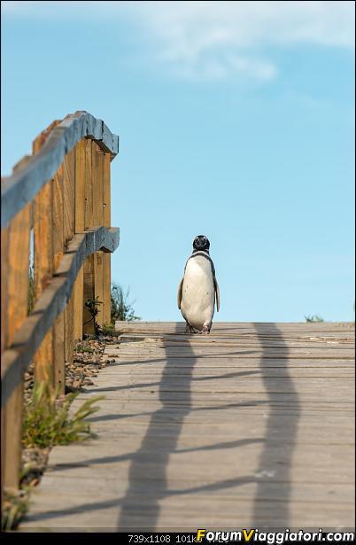 In Patagonia verso la fin del mundo-_dsc5801.jpg