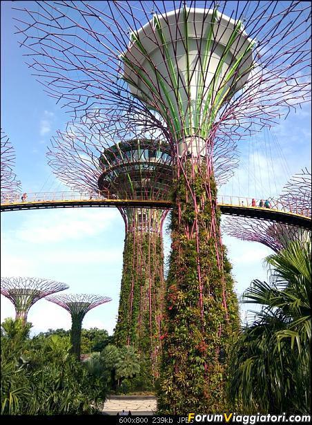 [Singapore e Borneo Malese] - Sulle tracce di Sandokan - Agosto 2017-img_20170805_164417_hdr.jpg