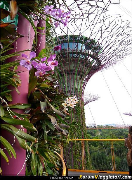 [Singapore e Borneo Malese] - Sulle tracce di Sandokan - Agosto 2017-img_20170805_172946_hdr.jpg