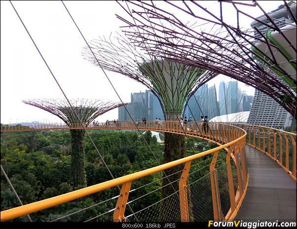 [Singapore e Borneo Malese] - Sulle tracce di Sandokan - Agosto 2017-img_20170805_173145_hdr-2-.jpg