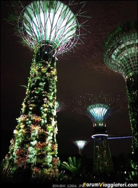 [Singapore e Borneo Malese] - Sulle tracce di Sandokan - Agosto 2017-img_20170805_200459.jpg