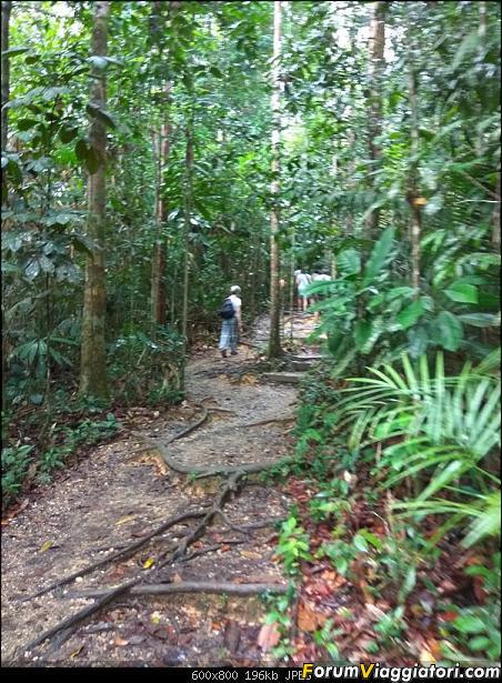 [Singapore e Borneo Malese] - Sulle tracce di Sandokan - Agosto 2017-img_20170810_091327.jpg