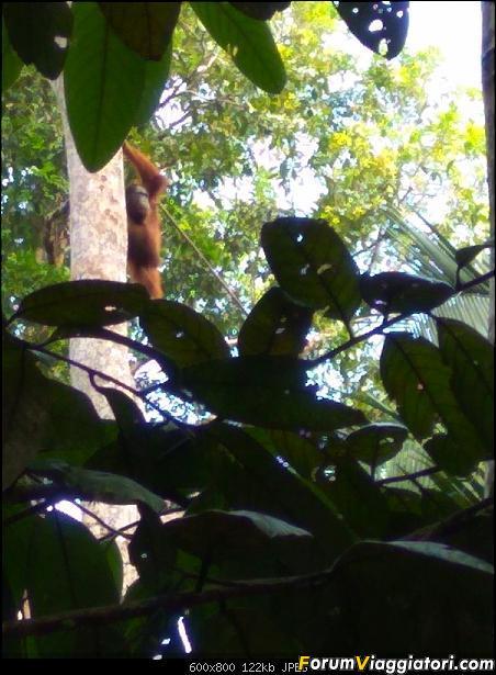 [Singapore e Borneo Malese] - Sulle tracce di Sandokan - Agosto 2017-img_20170810_094901.jpg