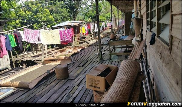 [Singapore e Borneo Malese] - Sulle tracce di Sandokan - Agosto 2017-20170811_110531-800-x-450-.jpg