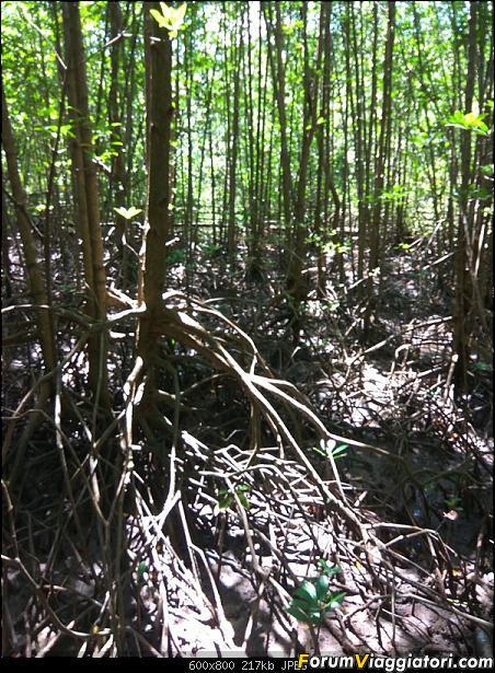 [Singapore e Borneo Malese] - Sulle tracce di Sandokan - Agosto 2017-img_20170813_105250.jpg