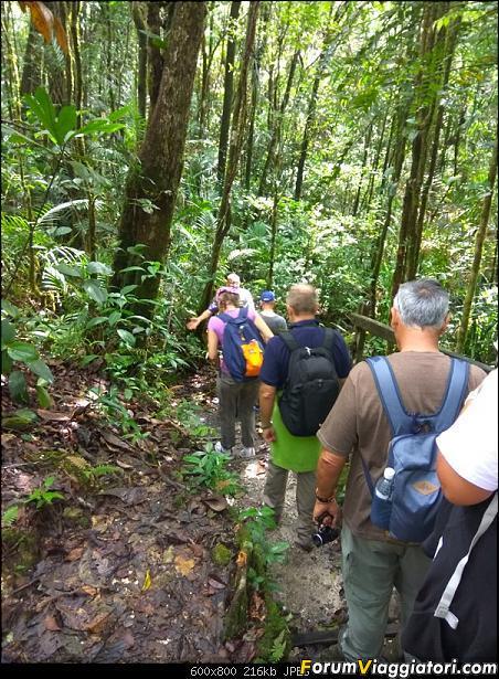 [Singapore e Borneo Malese] - Sulle tracce di Sandokan - Agosto 2017-img_20170814_105049.jpg