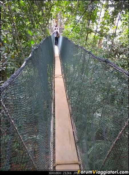 [Singapore e Borneo Malese] - Sulle tracce di Sandokan - Agosto 2017-img_20170814_155157.jpg