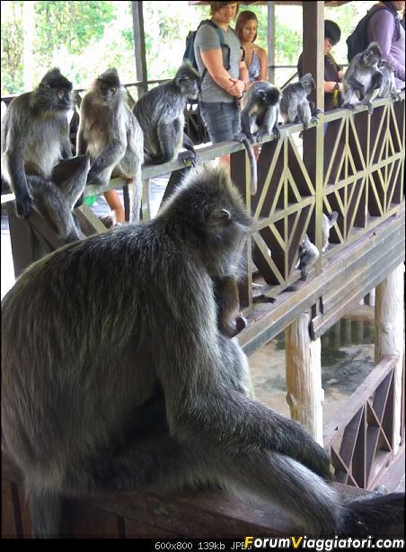 [Singapore e Borneo Malese] - Sulle tracce di Sandokan - Agosto 2017-img_20170815_155750.jpg