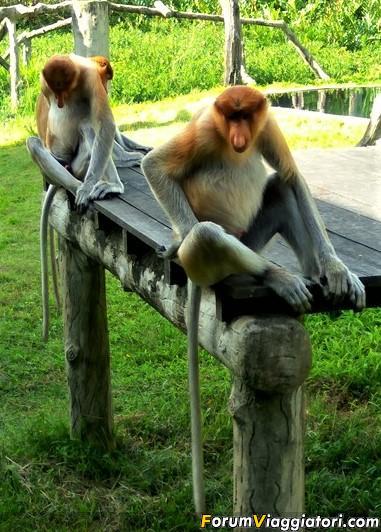 [Singapore e Borneo Malese] - Sulle tracce di Sandokan - Agosto 2017-img_20170815_160328_hdr-2-.jpg
