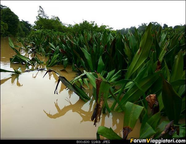 [Singapore e Borneo Malese] - Sulle tracce di Sandokan - Agosto 2017-img_20170817_071334_hdr.jpg