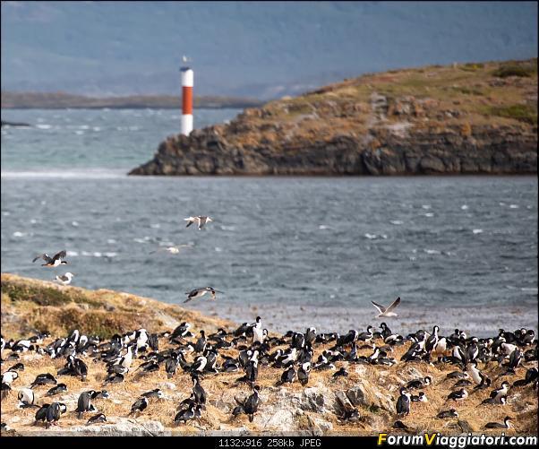 In Patagonia verso la fin del mundo-_dsc5819.jpg