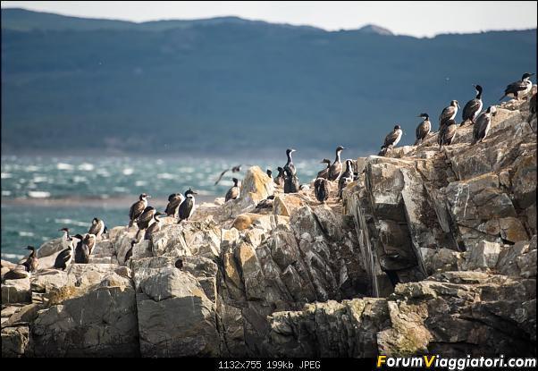 In Patagonia verso la fin del mundo-_dsc5904.jpg