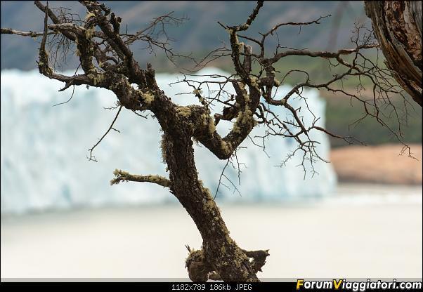 In Patagonia verso la fin del mundo-_dsc6191.jpg