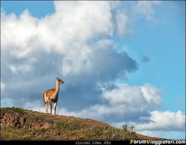 In Patagonia verso la fin del mundo-_dsc6407.jpg