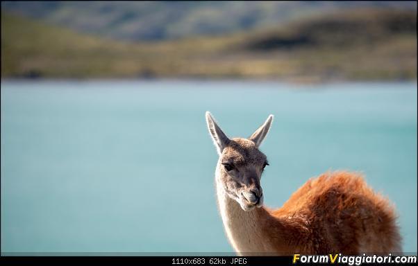 In Patagonia verso la fin del mundo-_dsc6413.jpg