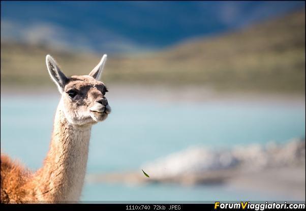 In Patagonia verso la fin del mundo-_dsc6415_a.jpg
