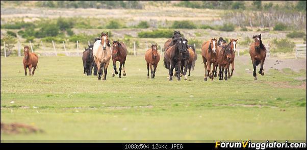 In Patagonia verso la fin del mundo-_dsc6422.jpg