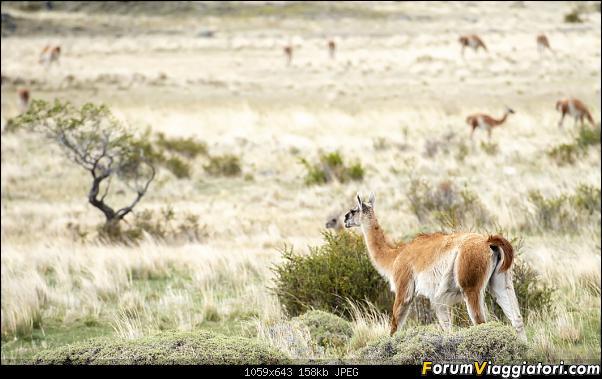 In Patagonia verso la fin del mundo-_dsc6533.jpg