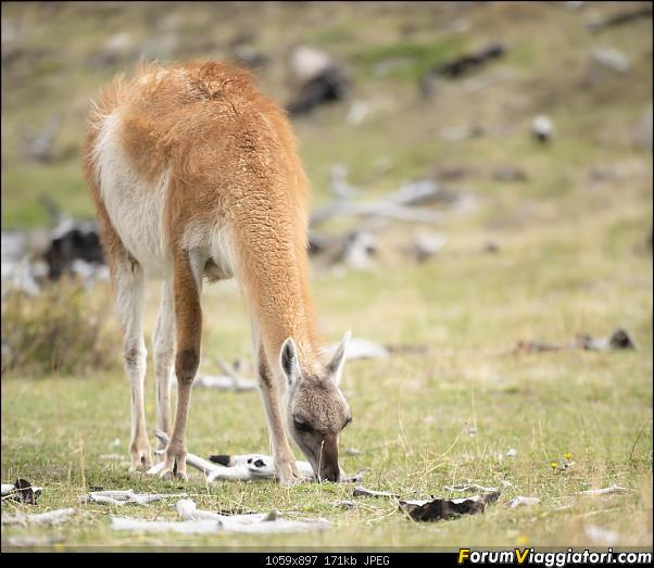 In Patagonia verso la fin del mundo-_dsc6537.jpg