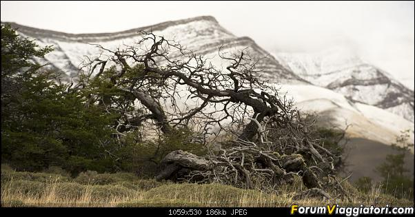 In Patagonia verso la fin del mundo-_dsc6561.jpg